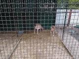 Притулок врятованих тварин у Львові