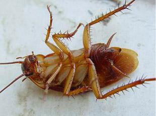 Таракани поверніться!!!
