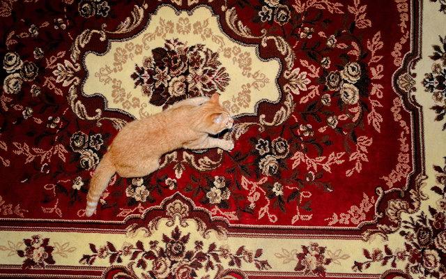 Як правильно очистити килим від плям?