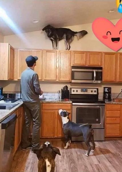 Собака втікає від господаря