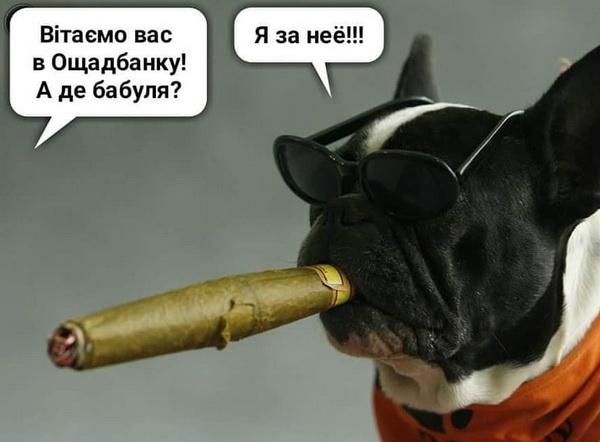 Пес з сигарою