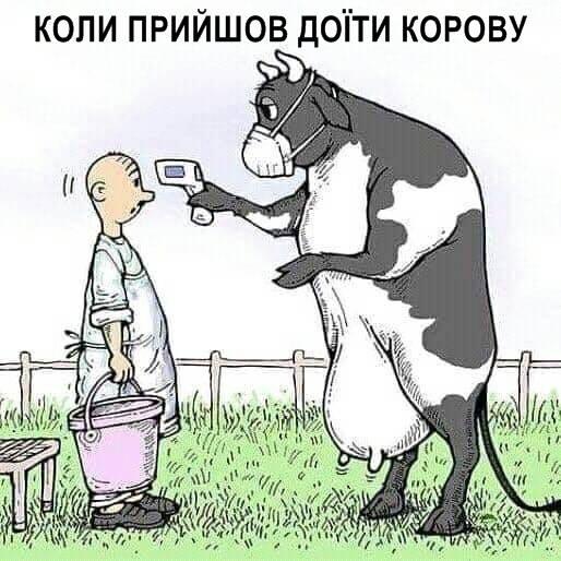Корова міряє температуру