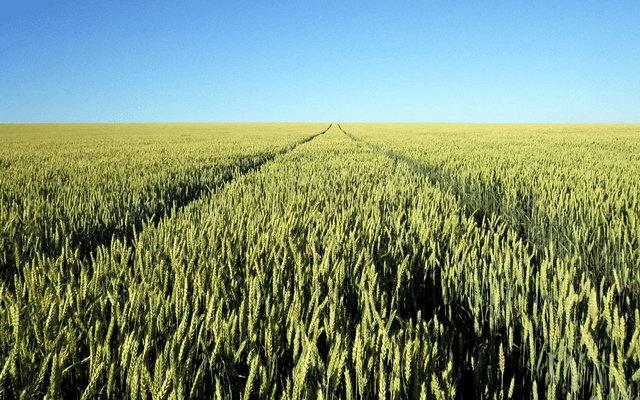 Закон про земельну реформу підписано: чого чекати українцям