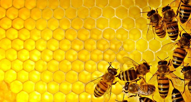 Де вибрати якісну продукцію для бджільництва?