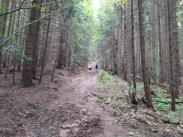 Дорога через ліс