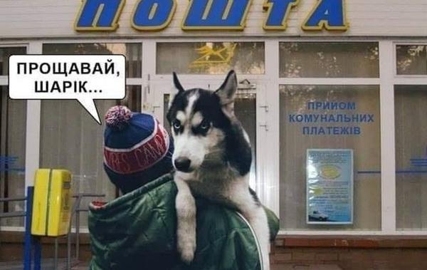 Собачий скандал