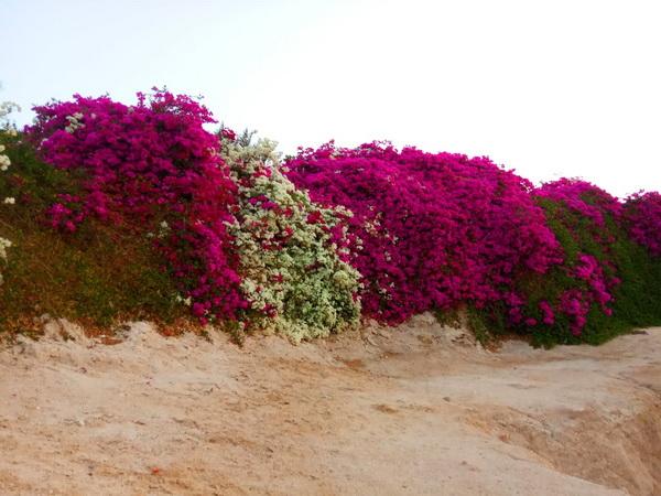 Квіти в Єгипті