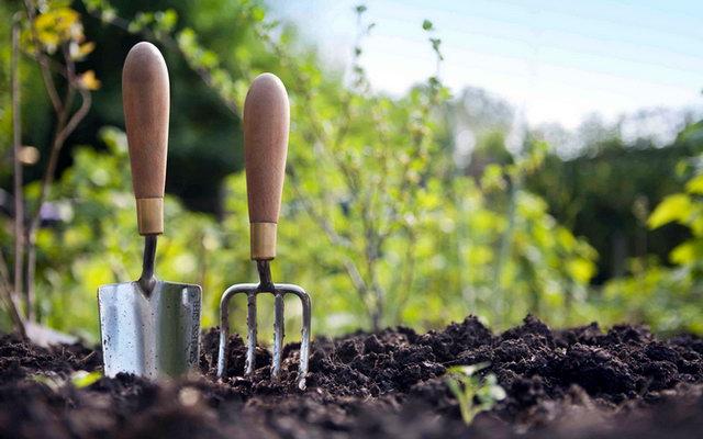 Догляд за садом після зими